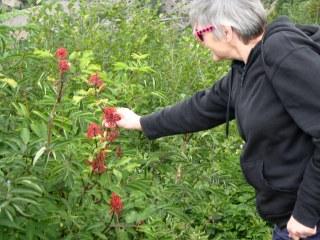 Linda at St. Helens (4)